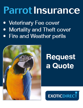 Exotic Direct Parrot Insurance