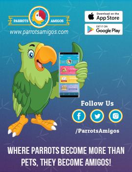 Parrots Amigos