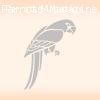 Amboina King Parrots