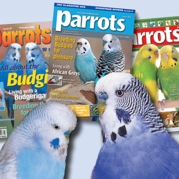 BlogBudgies