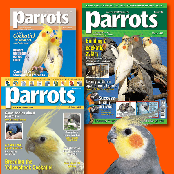 Cockatiels back issues