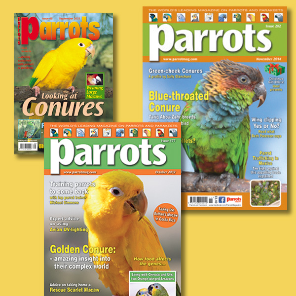 Conure back issues