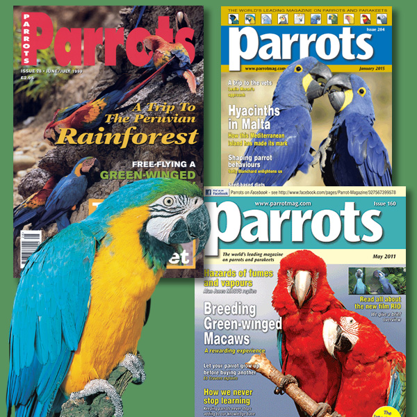 Macaw back issues