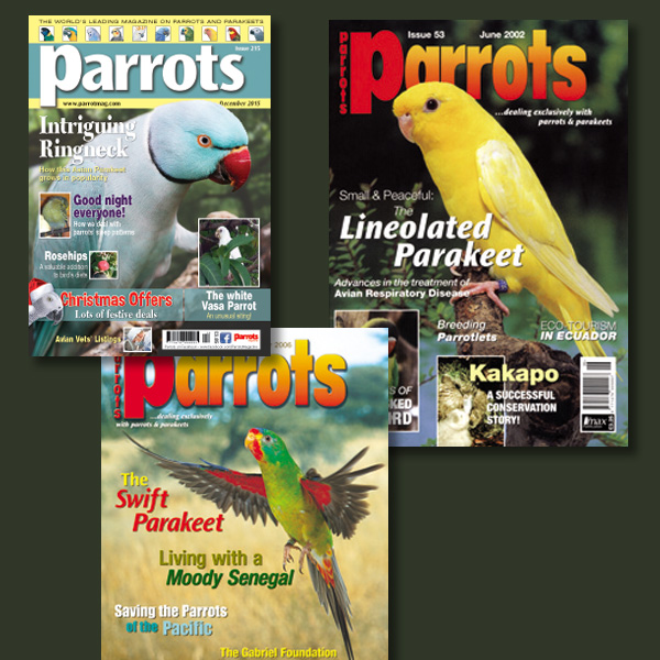 Parakeets back issues