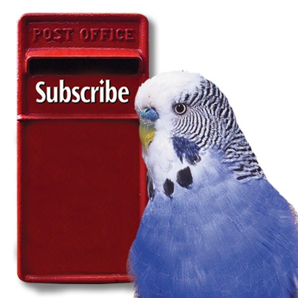 SubscribeWithBudgie