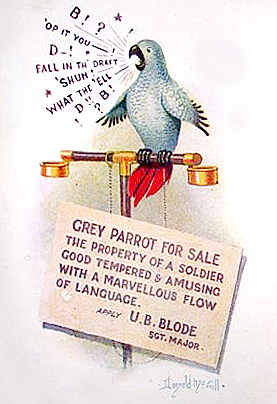 Grey Army Parrot