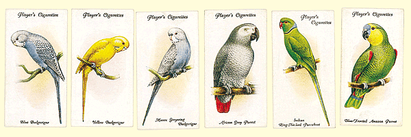 Collecting parrots on cigarette cards