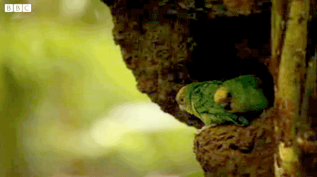 World's Smallest Parrot