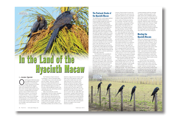 In the Land of the Hyacinth Macaw