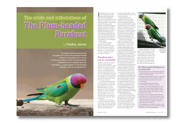 The Plum-headed Parakeet