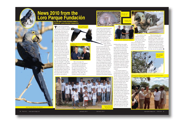 Parrots magazine January 2011 edition