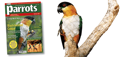 Parrots magazine issue 157