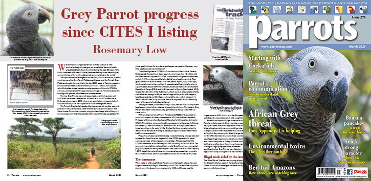 Spreads for web Parrots 278 2