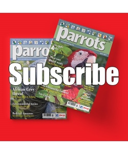 parrot-subscribe