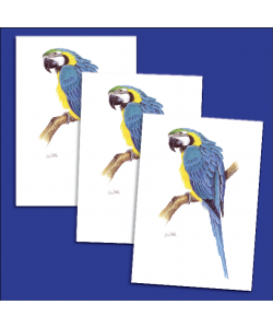 10 Parrot cards and envelopes - Blue & Gold Macaw
