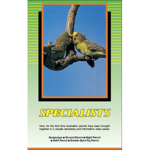 Land of Parrots - Specialists